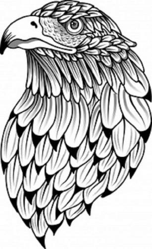 disegni aquila per tatuaggi