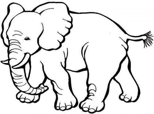 disegni bambini elefante