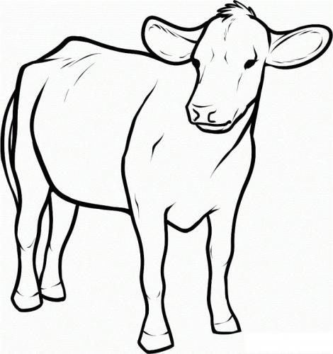 mucca senza macchie