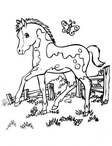 disegni cavalli