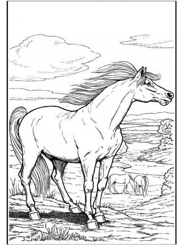 disegni cavallo a matita