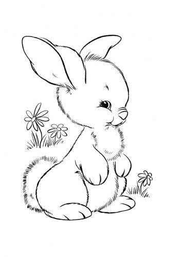 Disegni conigli