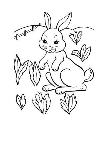 Disegni coniglio