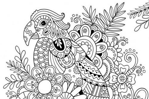 disegno pappagallo
