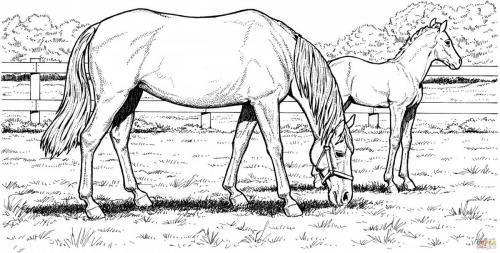 disegni da colorare di cavalli selvaggi