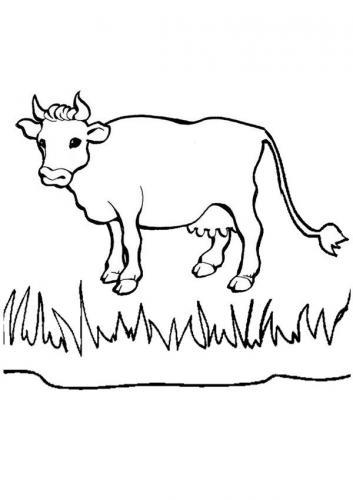 mucca tra l'erba