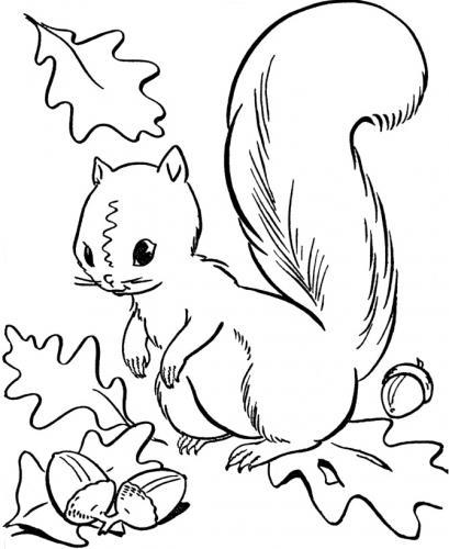 paesaggio autunnale con scoiattolo