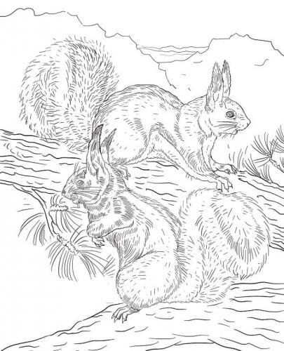 disegni da colorare e stampare scoiattoli