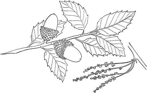disegni da colorare foglie