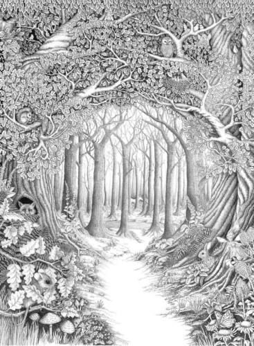 bosco da colorare