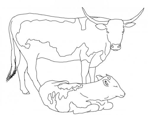 due mucche insieme
