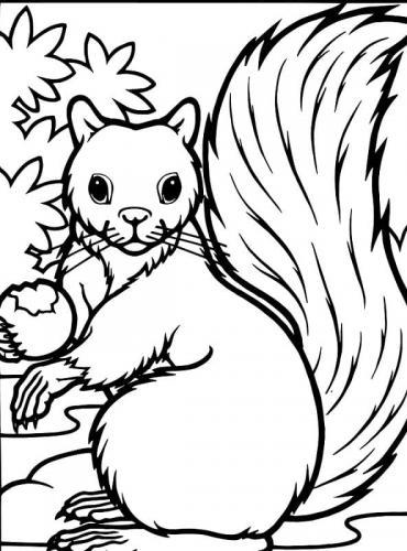 disegni da colorare gratis scoiattoli