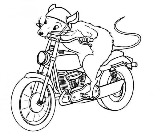 disegni da colorare motocross