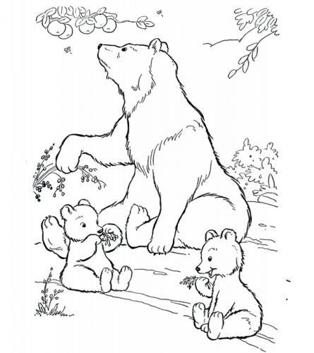 disegni da colorare orsetti