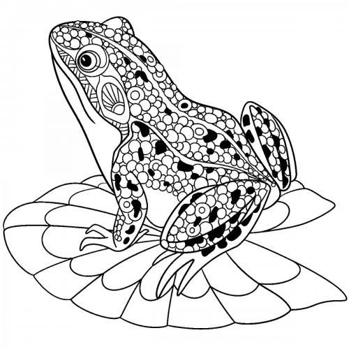 disegni da colorare per adulti rane