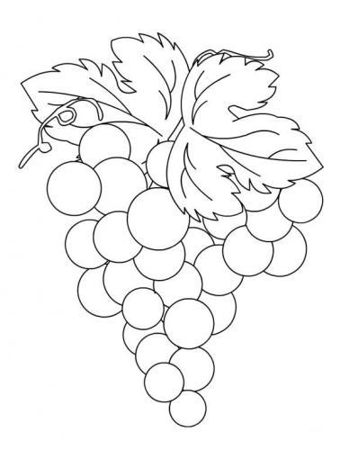 disegni da colorare uva e foglie