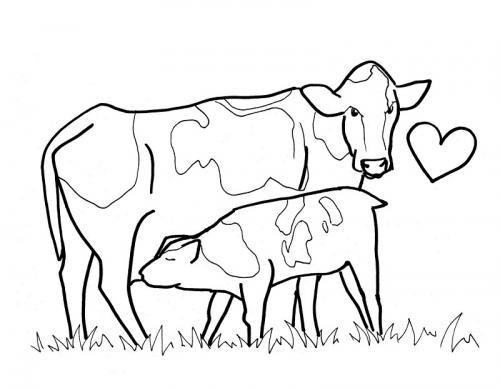 mucche con cuore