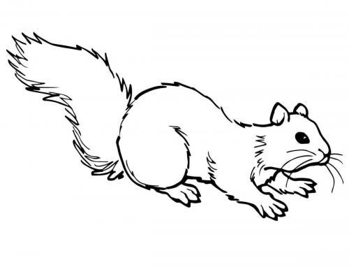 disegni da copiare scoiattolo