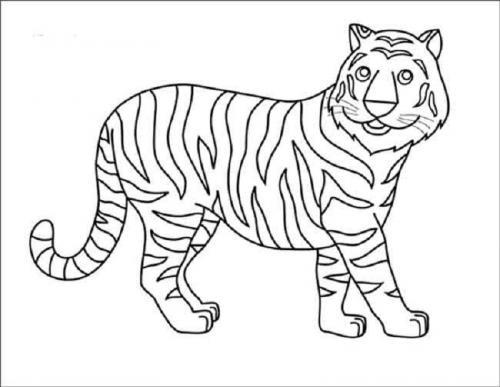 disegni da disegnare tigre