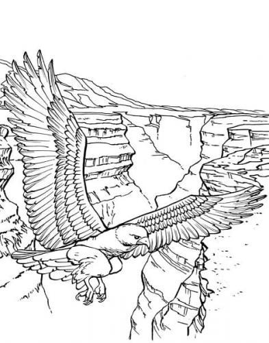 disegni da stampare aquila