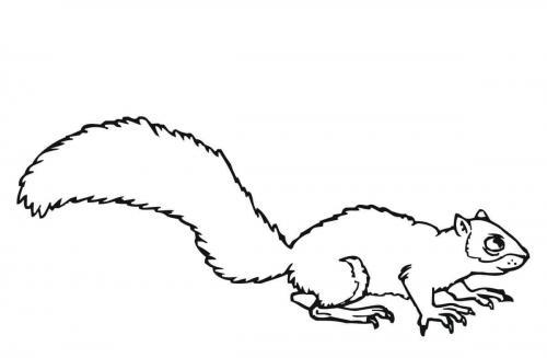 disegni da stampare e colorare scoiattolo