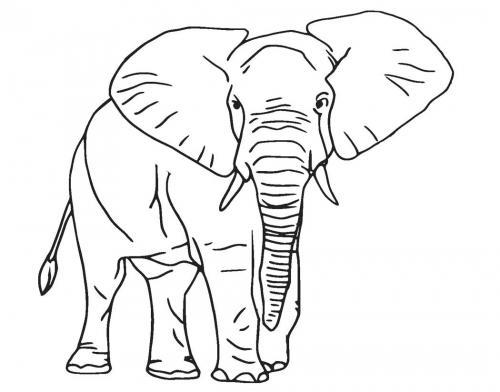 disegni da stampare elefante