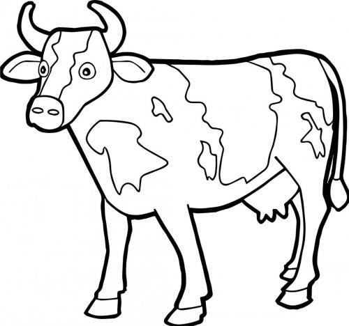 mucca elegante