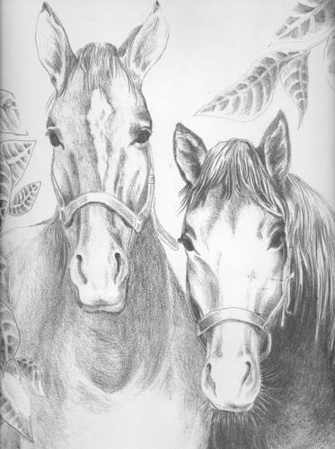 immagine di due cavalli