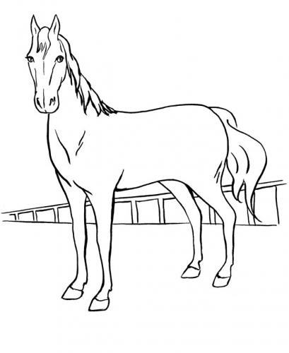 disegni di cavalli