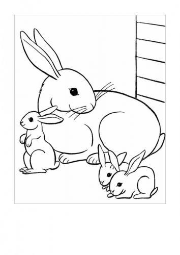 Disegni di conigli