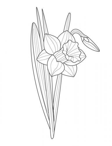 disegni di fiori da colorare