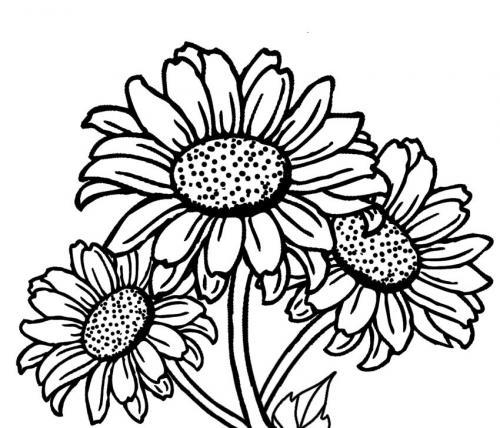 disegni di girasoli