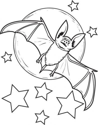 pipistrello tra le stelle
