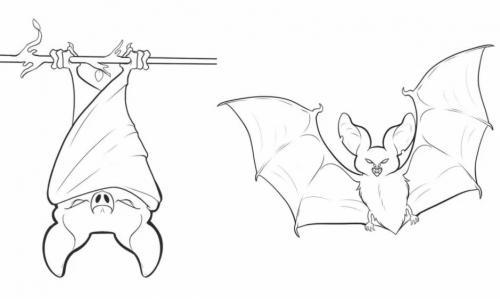 due pipistrelli