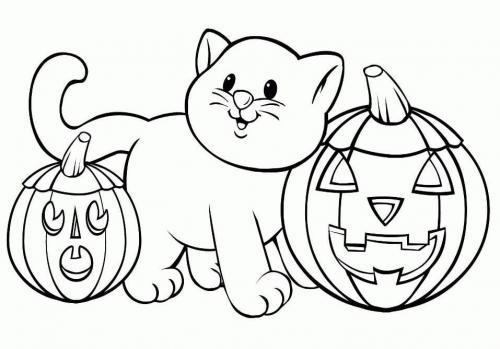 gattino con due zucche
