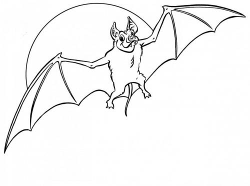 pipistrello che vola