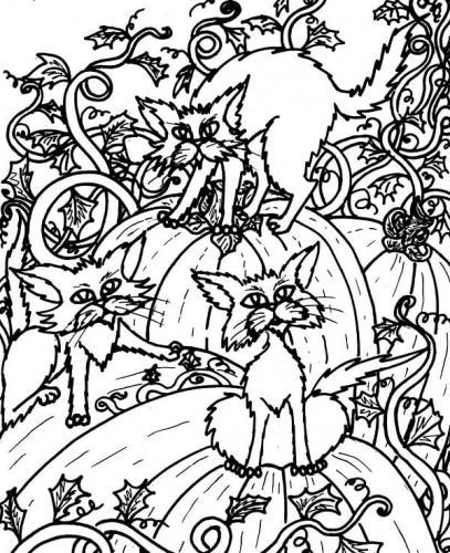 gatti con le zucche