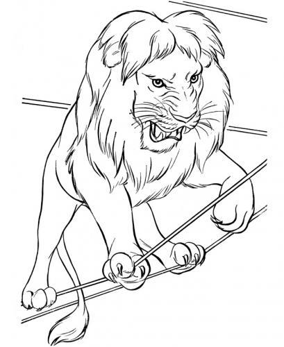 disegni di leone