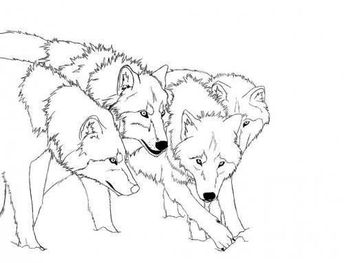 disegni di lupo