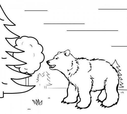 disegni di orsetti da colorare
