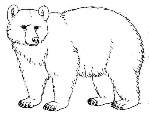 disegni di orsi da colorare