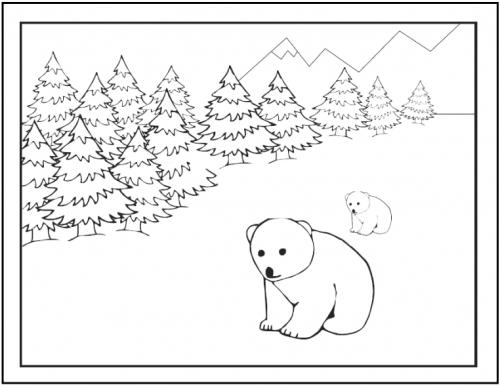 disegni di orsi