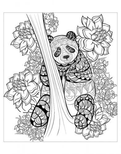 disegni di panda