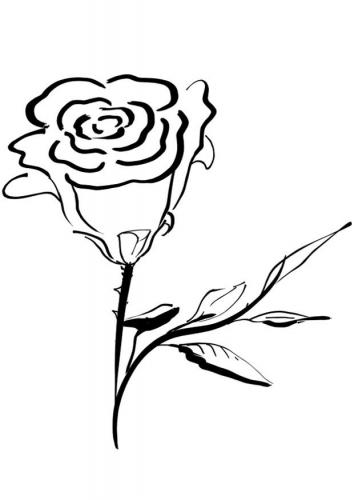 rosa da colorare