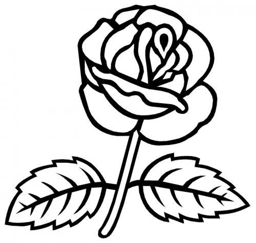 rosa stilizzata bella