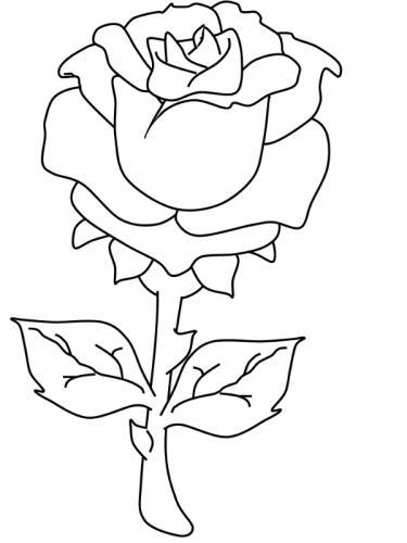 disegno di rosa