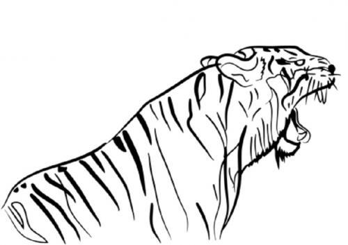 disegni di tigre