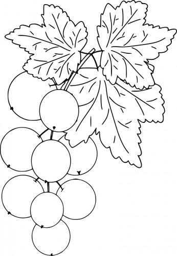 disegni frutta
