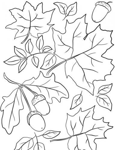 disegni foglie autunnali da colorare