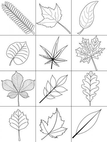 disegni foglie Autunno